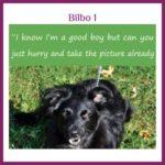 Bilbo-1
