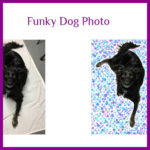 05-15-2018-gallery-funky-dog